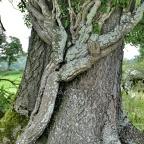 Ein Gespräch über Bäume